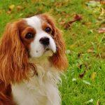 今のところダウの犬投資法は2016年も高リターン