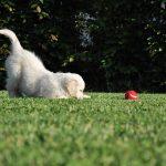 2017年ダウの犬投資法の途中経過はS&P500に完敗