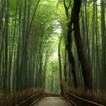 修善寺温泉 湯回廊 菊屋の宿泊記。昭和天皇や夏目漱石も滞在した由緒ある旅館