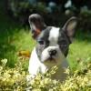 ダウの小犬戦略のパフォーマンス