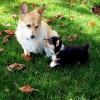2016年ダウの犬&ダウの小犬のリターン途中経過