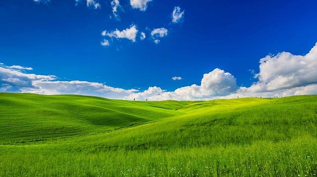 meadow-1239783_640