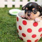 ダウの犬投資法の2016年パフォーマンス、負け犬なんかじゃない!2017年のダウの犬銘柄も紹介。