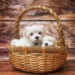 日本株でも米国株でもダウの犬戦略は有効!