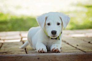 2017年のダウの犬はS&P500に逆転勝ち!2018年のダウの犬銘柄も紹介。