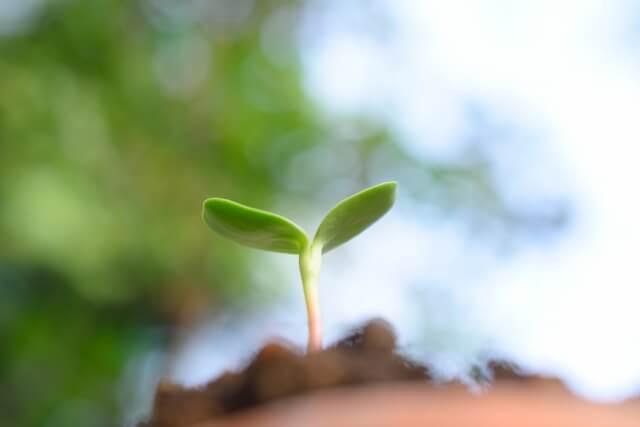 配当成長率の高い銘柄をポートフォリオの柱にする