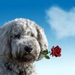 【ダウの犬投資法】2019年上半期はNYダウにアンダーパフォーム